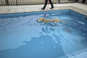 Compass Pools Melbourne X Trainer 8.2 self cleaning pool with custom ramp Kensington Victoria 6